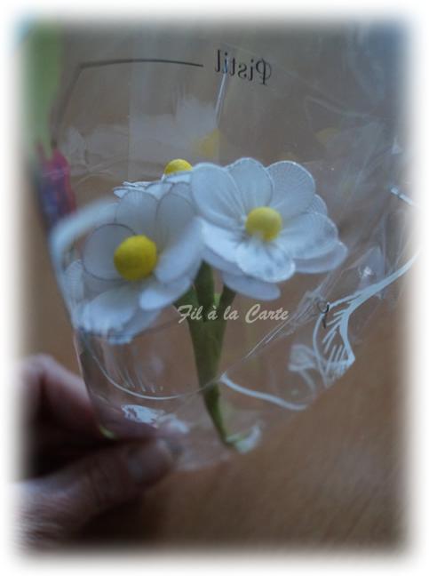 Fleurs blanches collant2